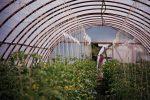 Greenhouse Ray and Doug built - Moonrise Photography